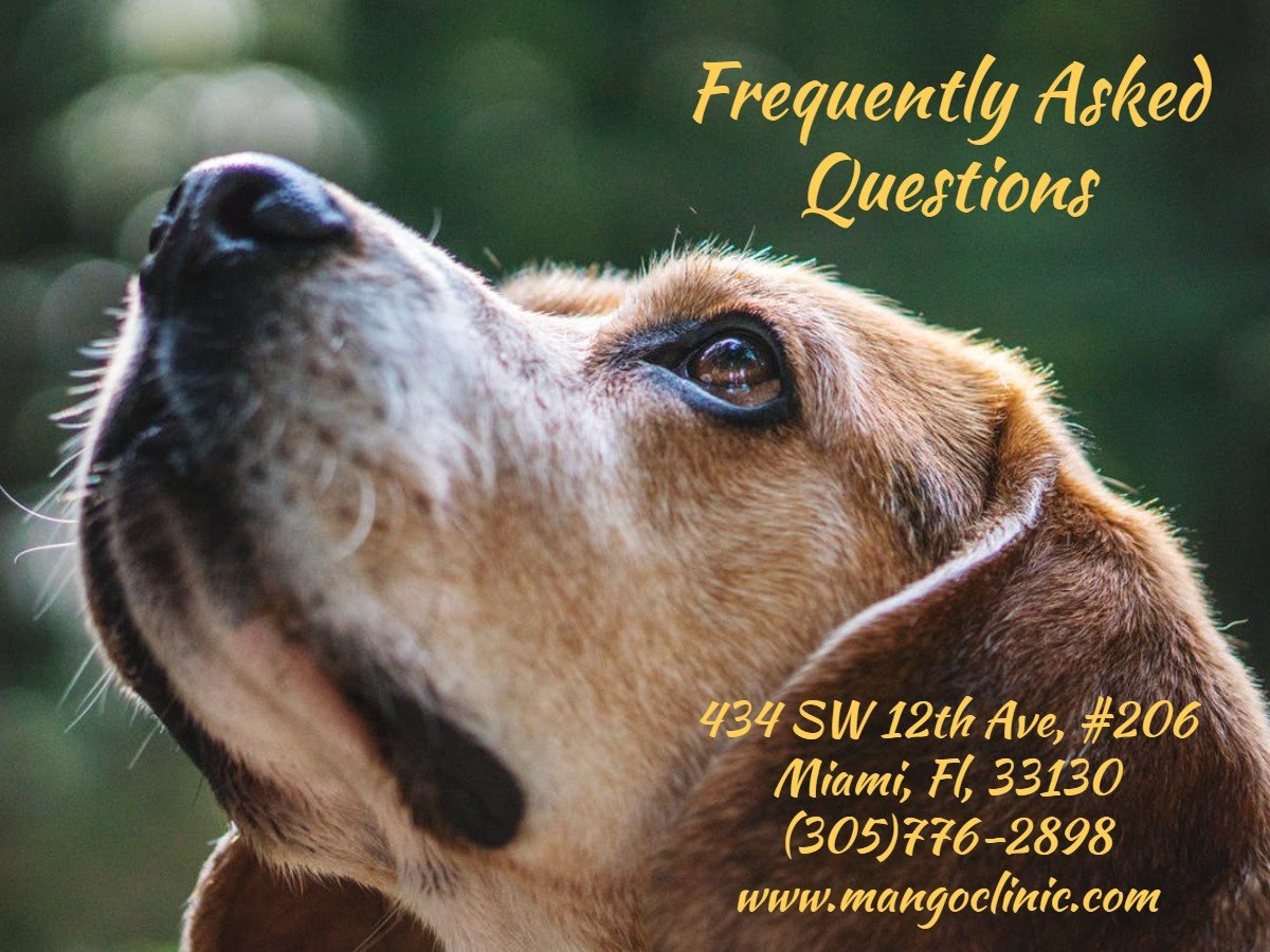 Emotional Support Animal Miami FAQ