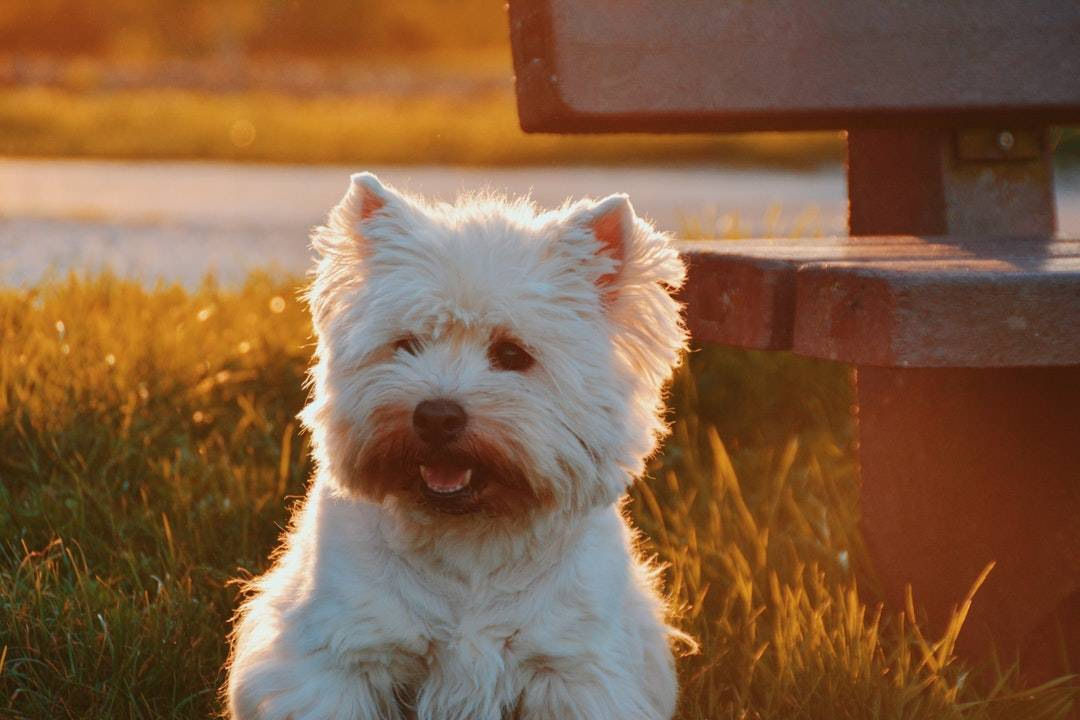 Destin emotional support animal