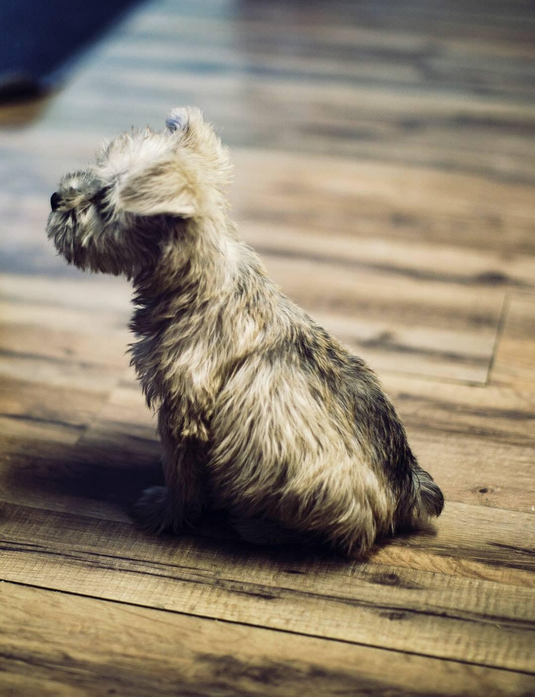 Alachua emotional support animal
