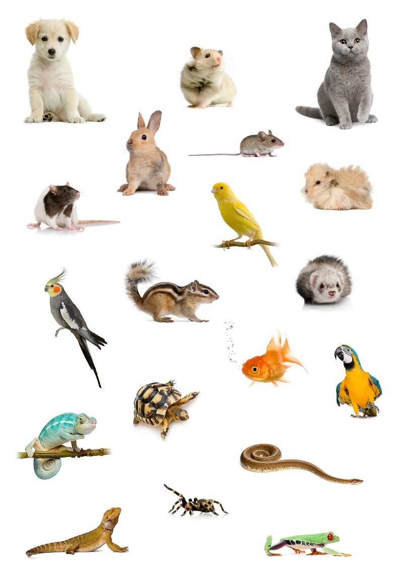List of animals good for ESA