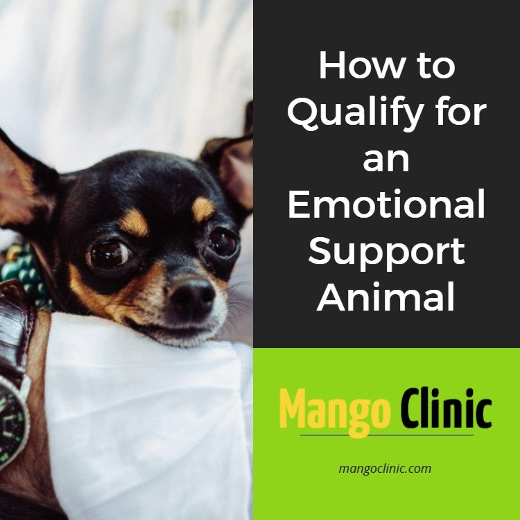 Qualify for Emotional Support Animal