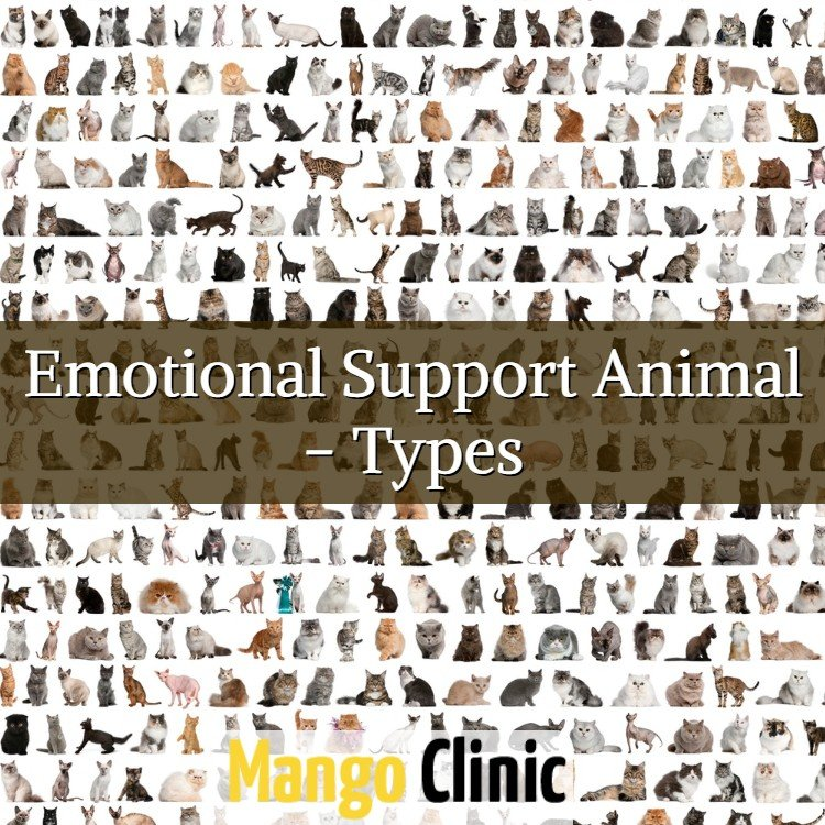 Types-of-Emotional-Support-Animal.jpg