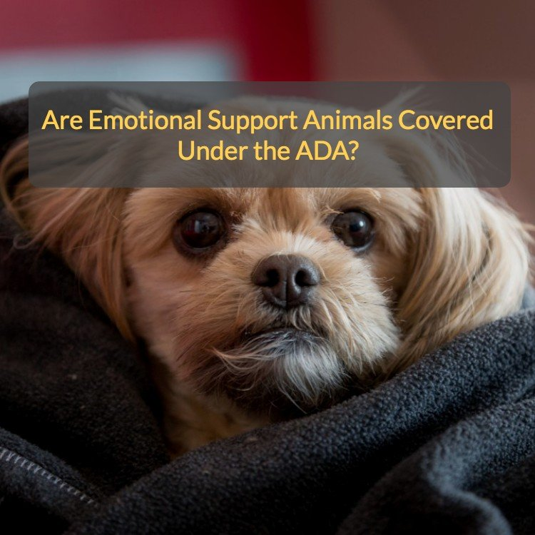 Emotional-Support-Animals-Covered-Under-the-ADA.jpg