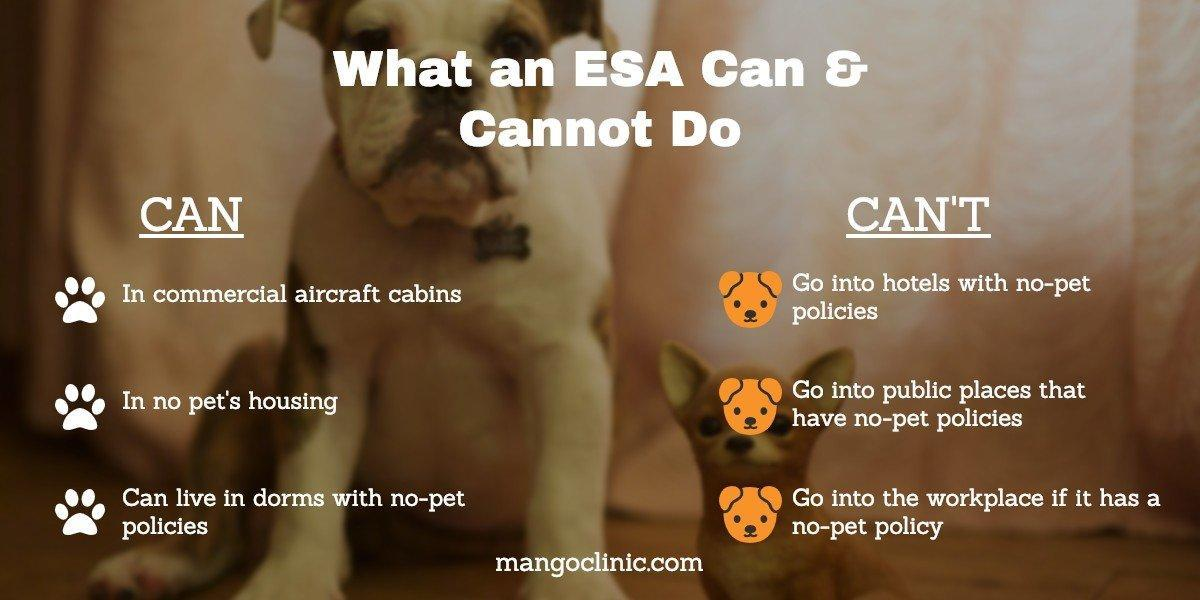 Things an ESA Letter Can Or Cannot Do