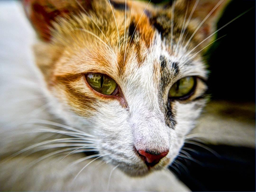 emotional support animal letter in Baldwinsville