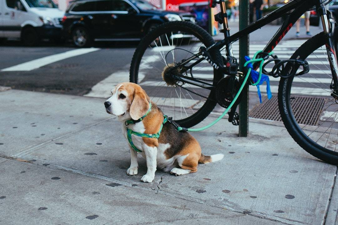emotional support animal letter in Bloomfield