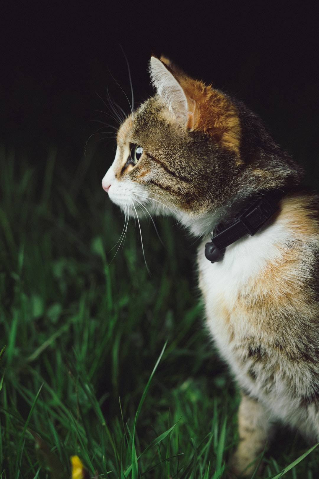 emotional support animal letter in Bridgehampton