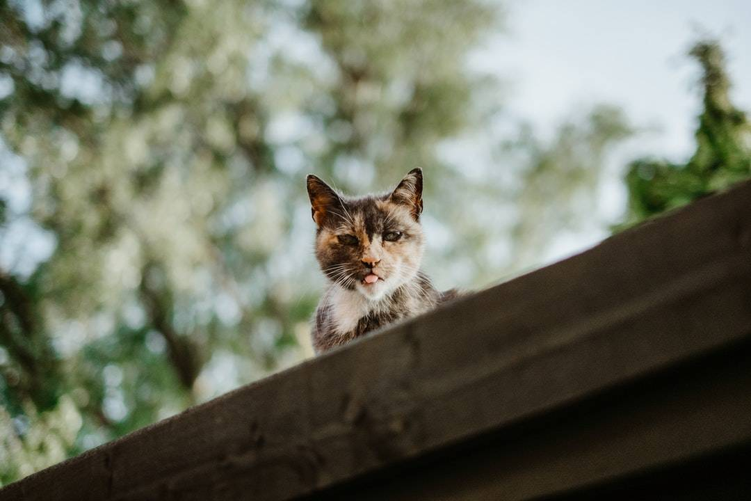 emotional support animal letter in Bayville
