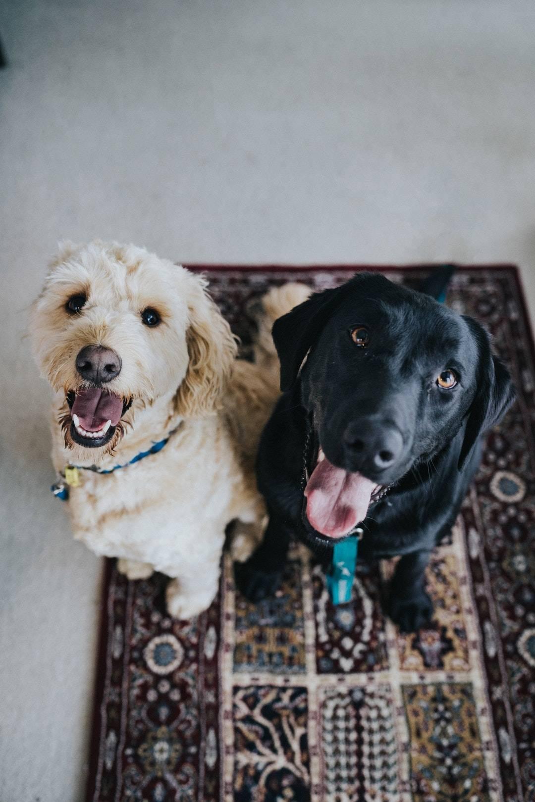 Emotional Support Animal Letter Huntington, NY · Mango Clinic