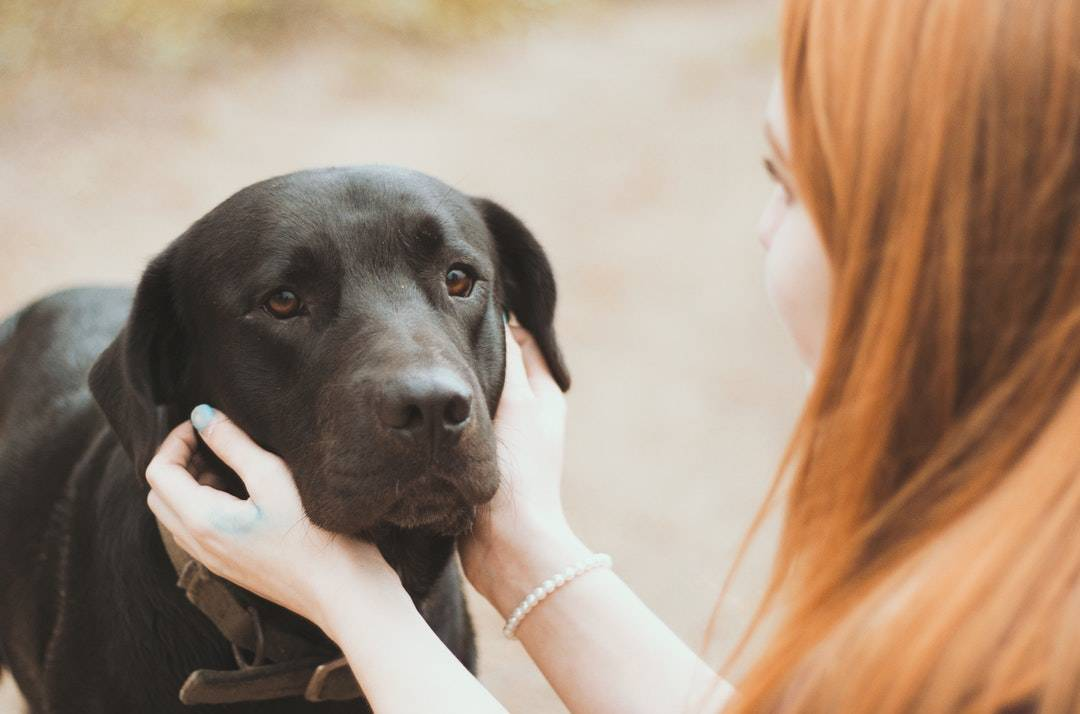 emotional support animal letter in Bronxville