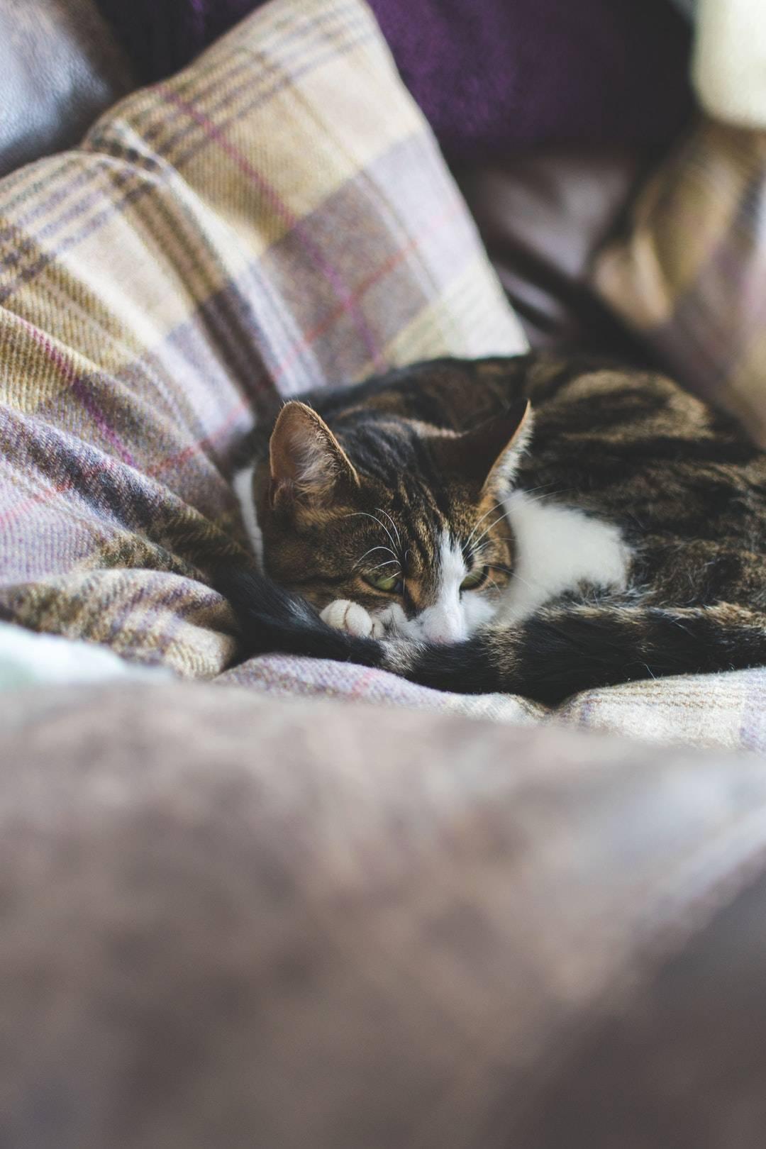emotional support animal letter in Bedford