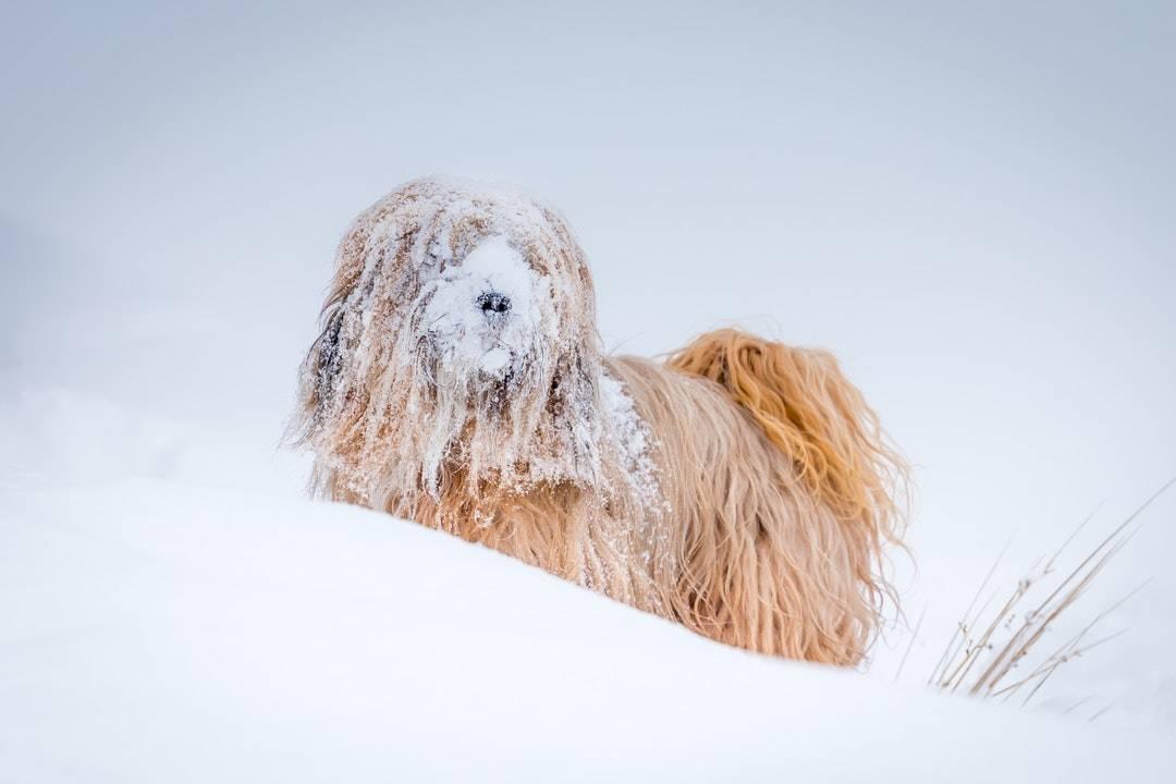 emotional support animal letter in Castorland