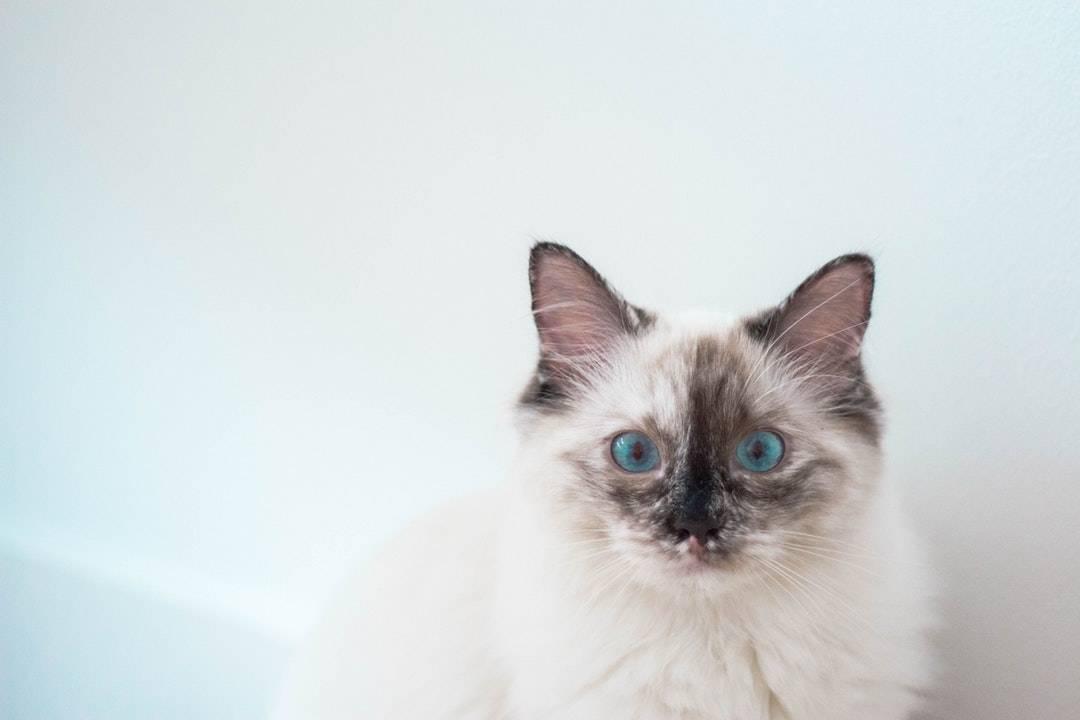 emotional support animal letter in Brasher Falls-Winthrop