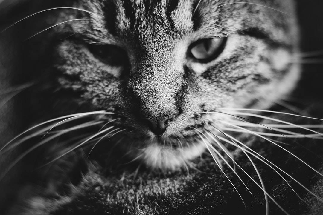 emotional support animal letter in Altamont