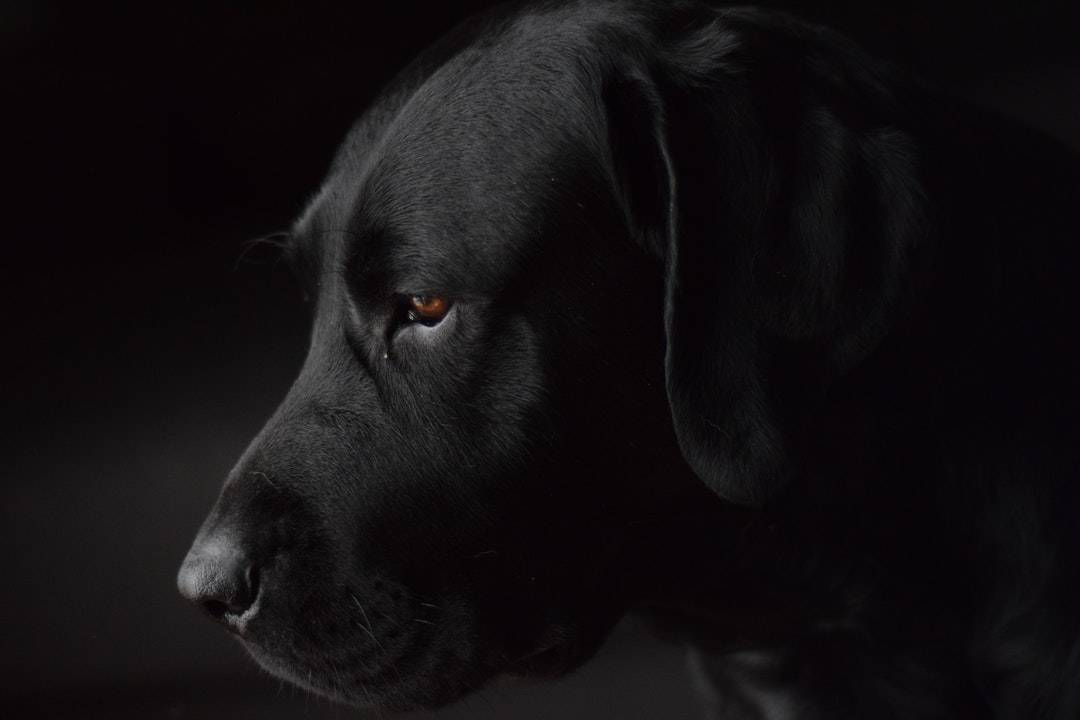 emotional support animal letter in Westhampton Beach