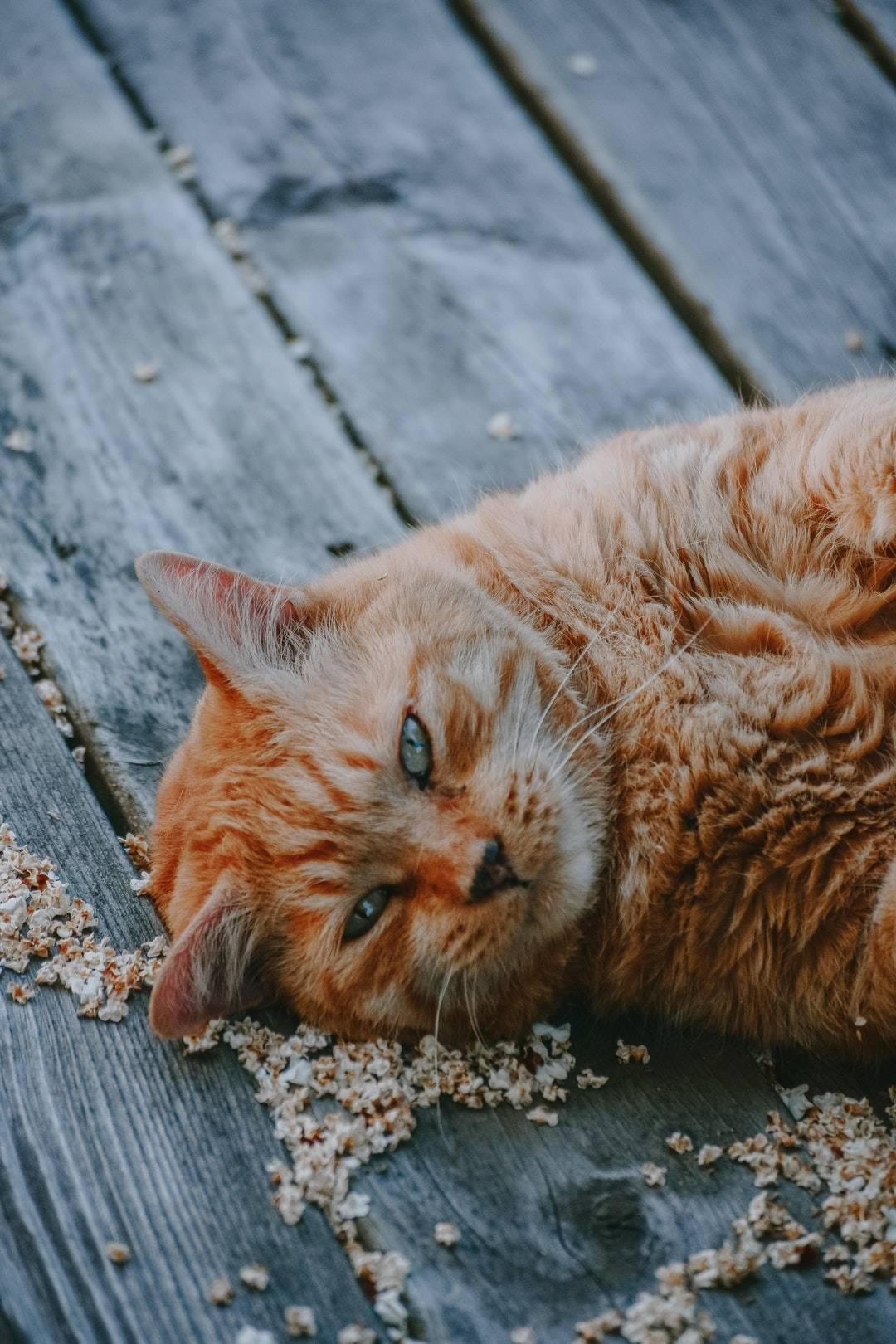 emotional support animal letter in Woodridge