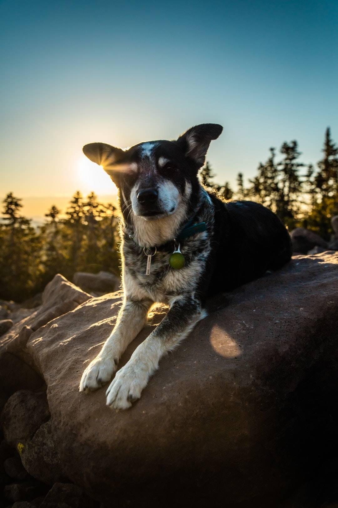 emotional support animal letter in Beaverdam Lake-Salisbury Mills