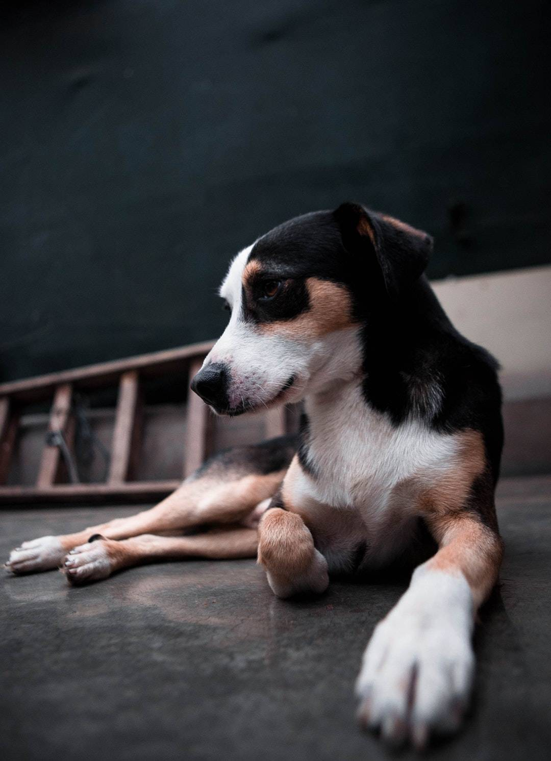 emotional support animal letter in Callicoon