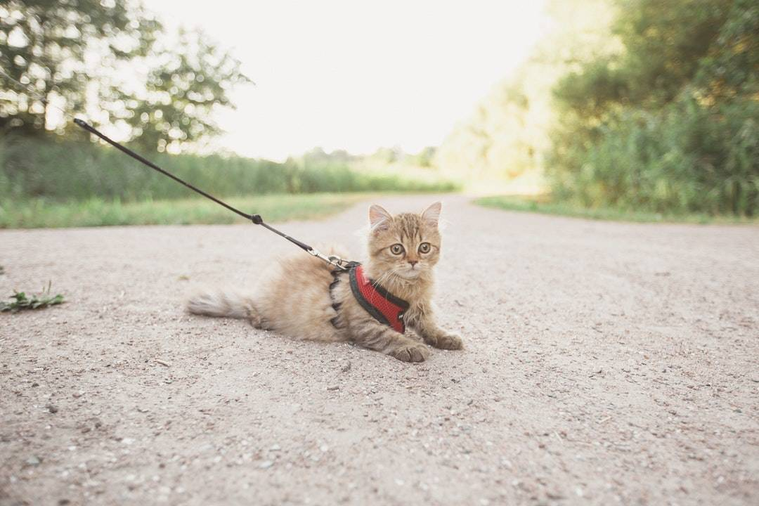 emotional support animal letter in Chateaugay