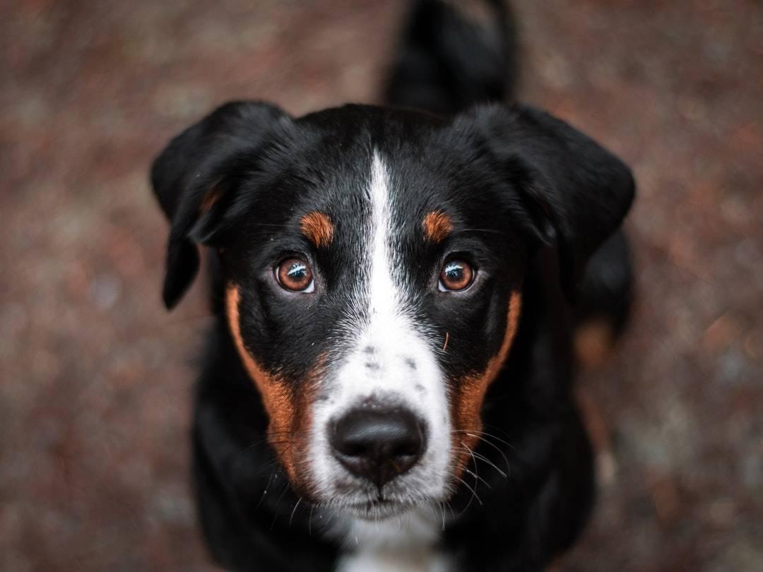 emotional support animal letter in Candor