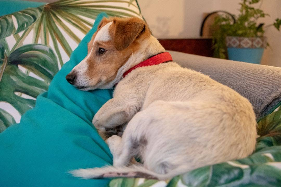 emotional support animal letter in Brightwaters