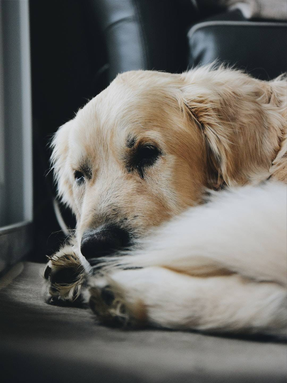 emotional support animal letter in Arlington