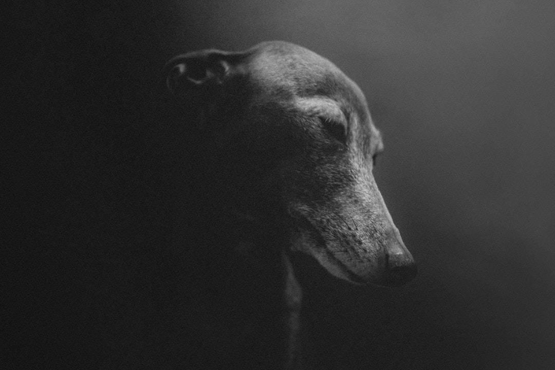 emotional support animal letter in Burdett