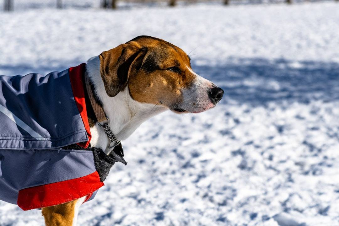 emotional support animal letter in Woodbury