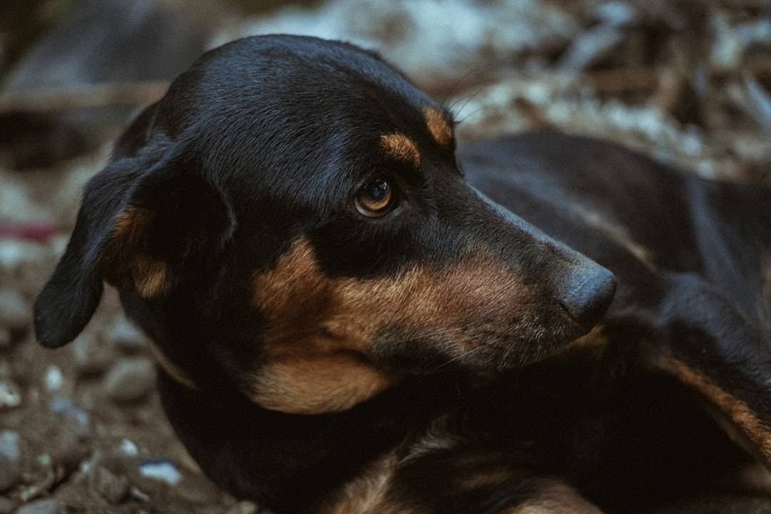 emotional support animal letter in Canisteo