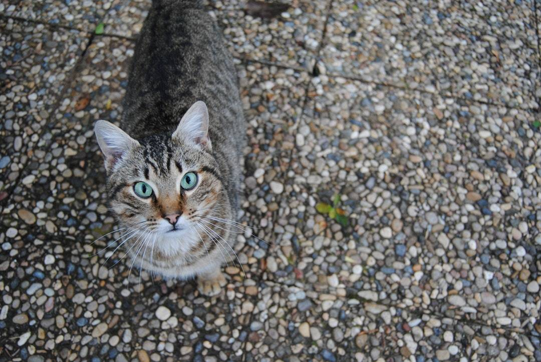 emotional support animal letter in Bellefontaine Neighbors