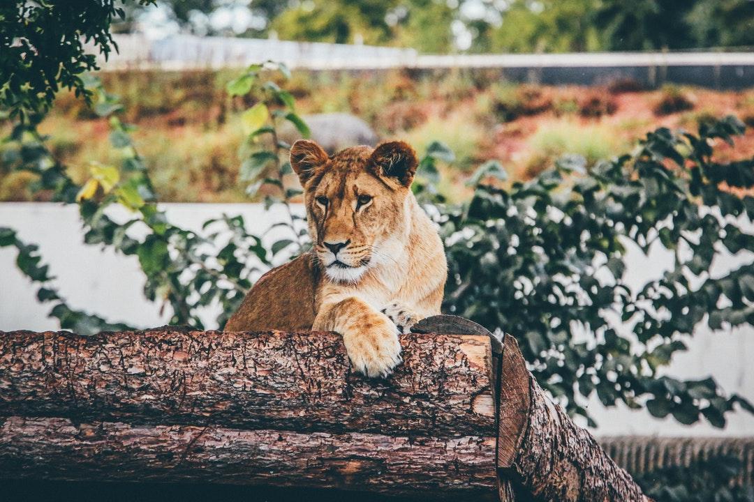 emotional support animal letter in Bradford