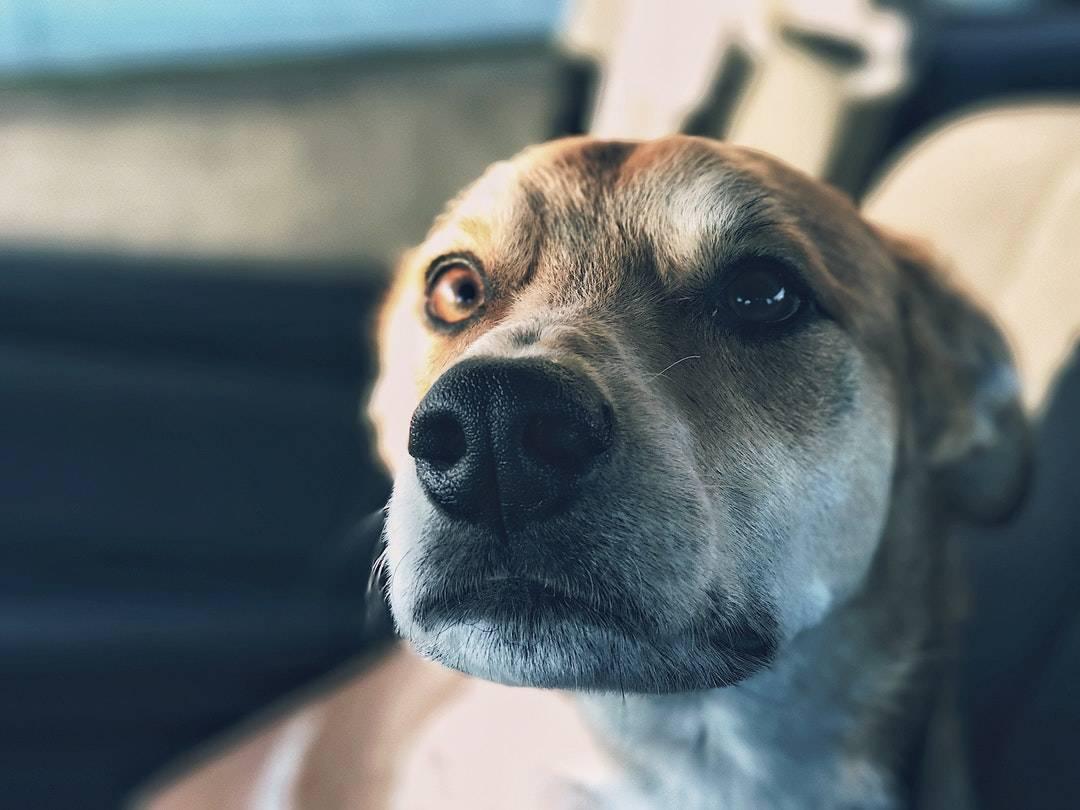 emotional support animal letter in Wentzville
