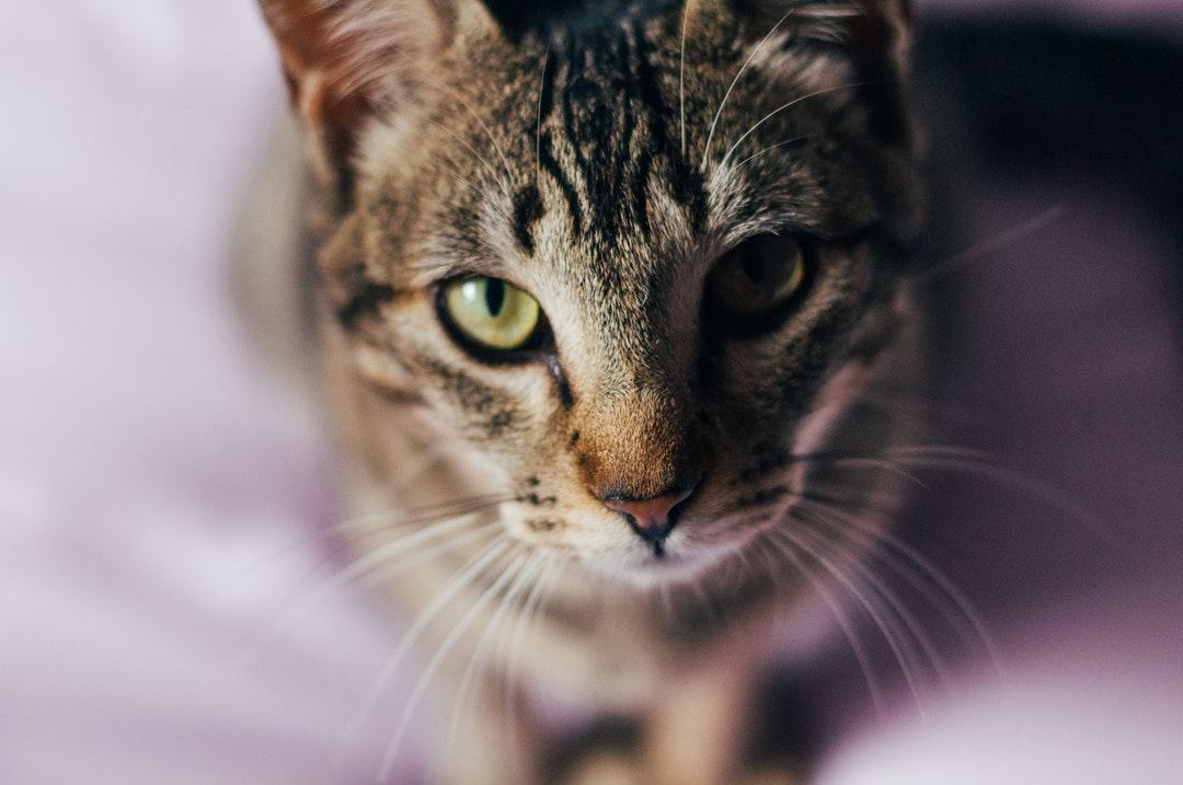 emotional support animal letter in Burbank