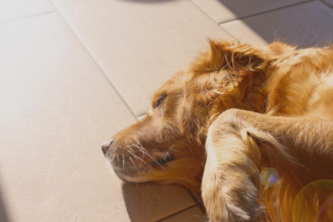 emotional support animal letter in Bremerton