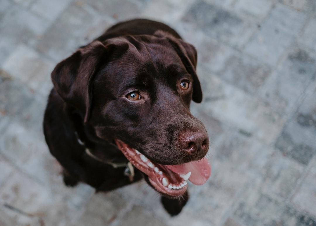 emotional support animal letter in Bellevue