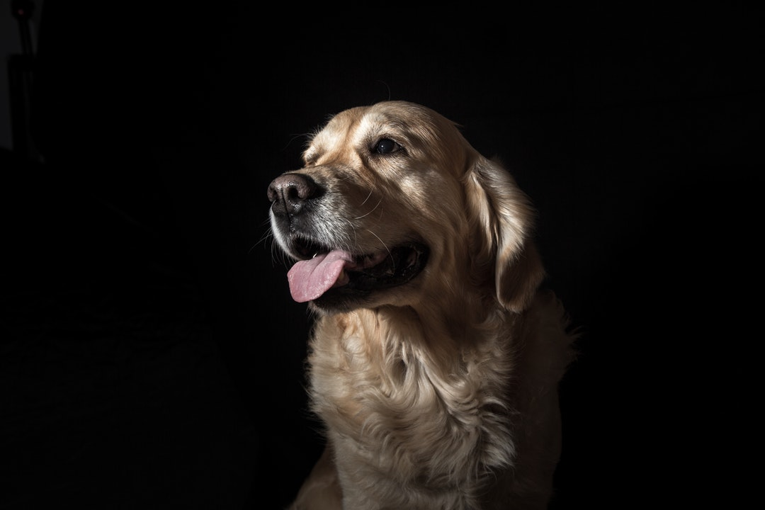 emotional support animal letter in Bothell
