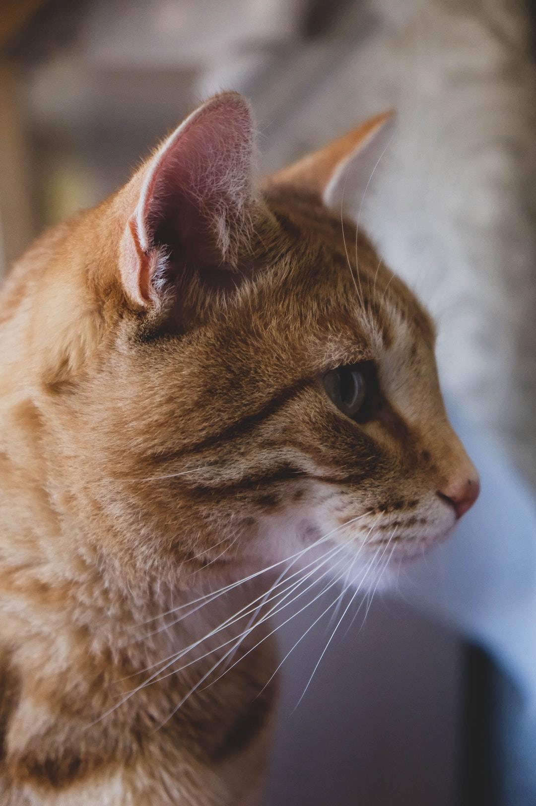 emotional support animal letter in Neosho