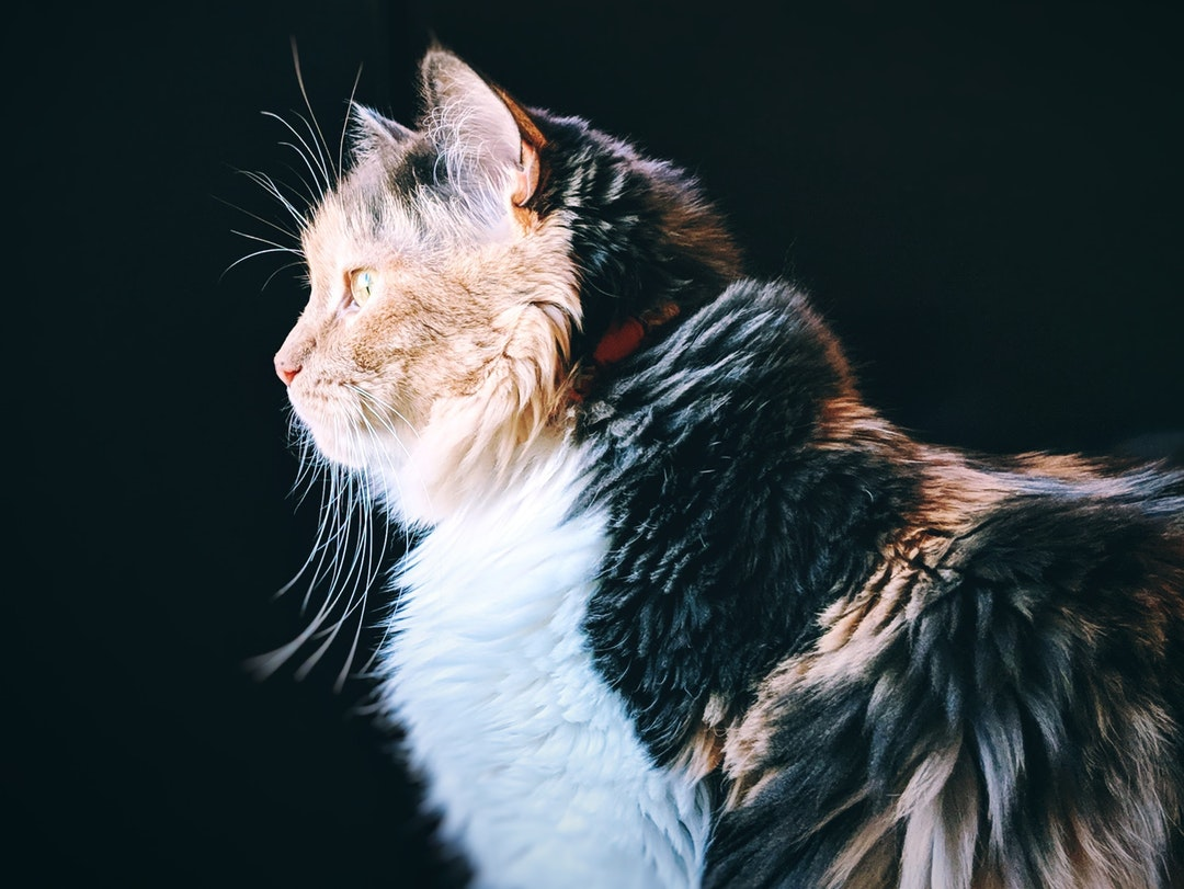 emotional support animal letter in Bourbonnais