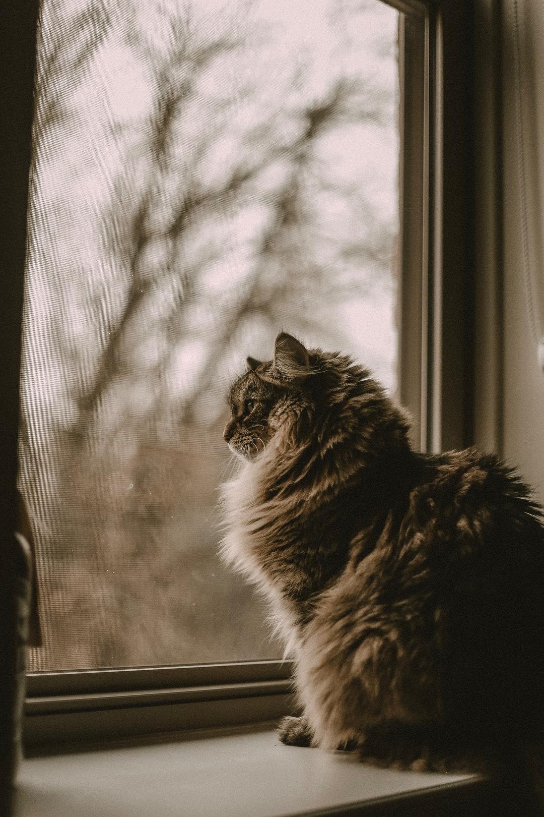 emotional support animal letter in Carol Stream