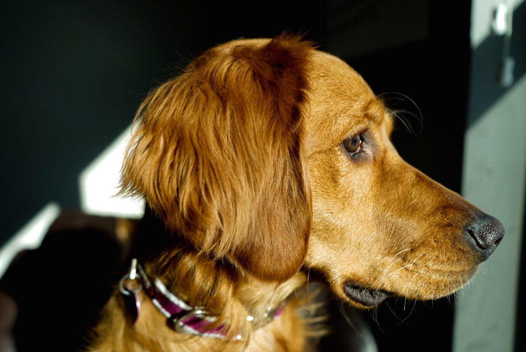 emotional support animal letter in Bristol