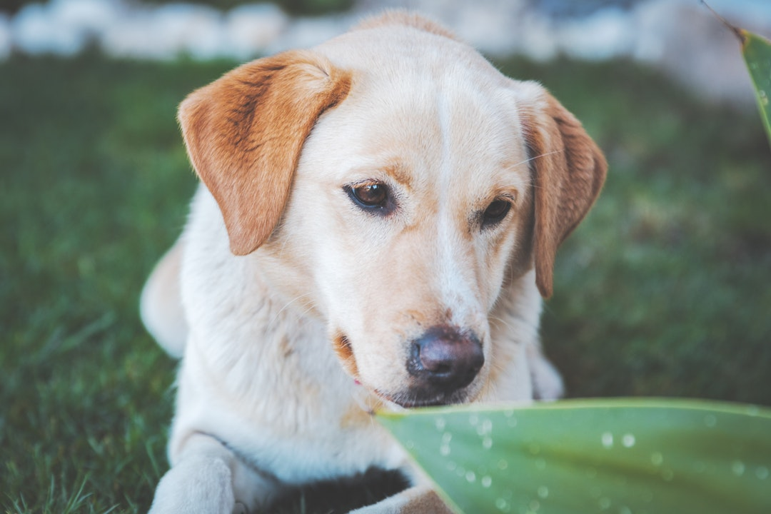 emotional support animal letter in Charleston