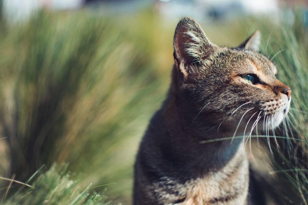 emotional support animal letter in Bonne Terre
