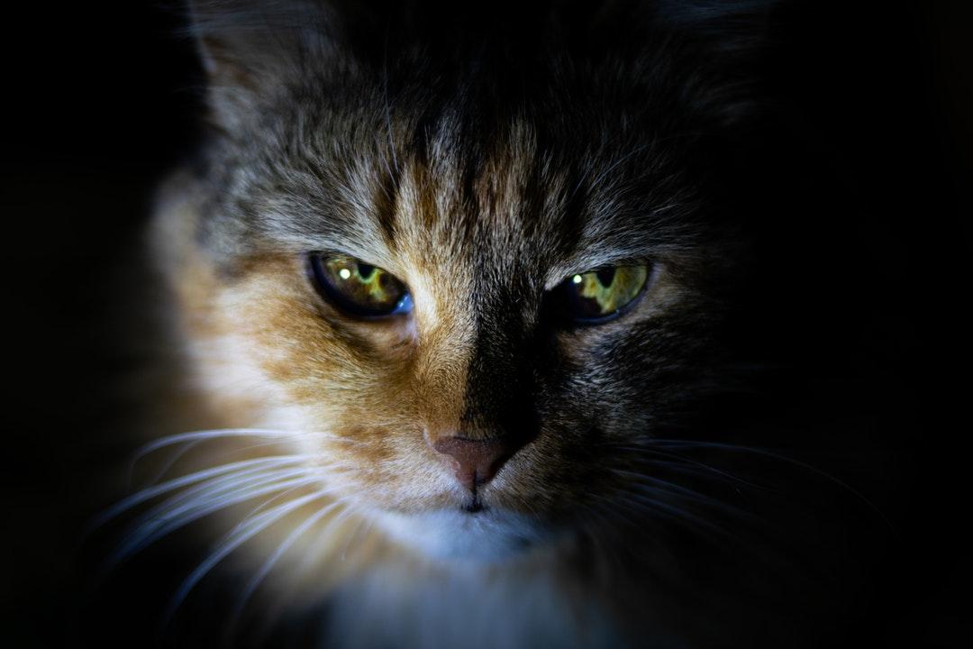emotional support animal letter in Anacortes