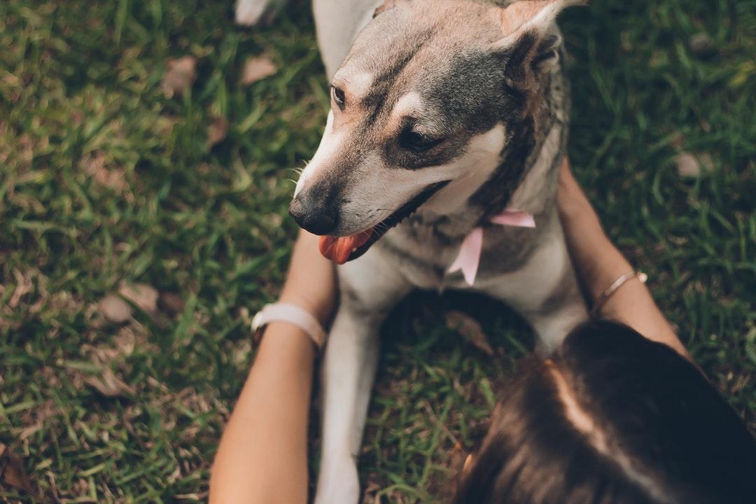emotional support animal letter in White Oak