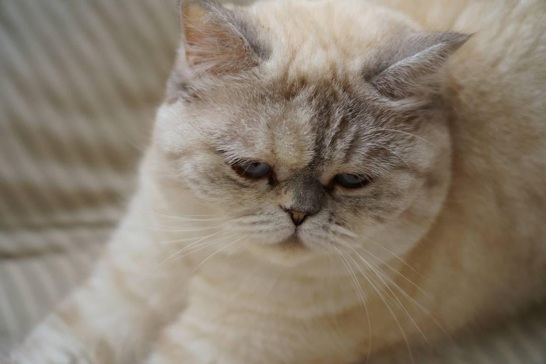 emotional support animal letter in Warrensburg
