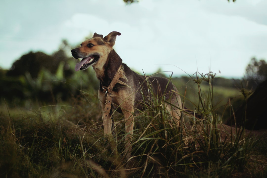emotional support animal letter in Buckeye