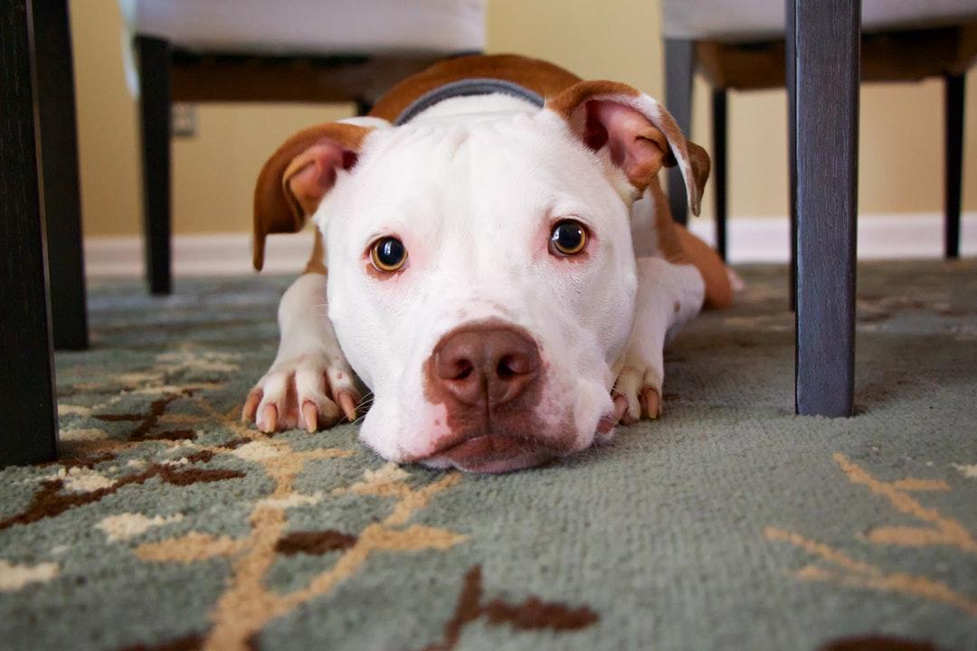 emotional support animal letter in Centerville
