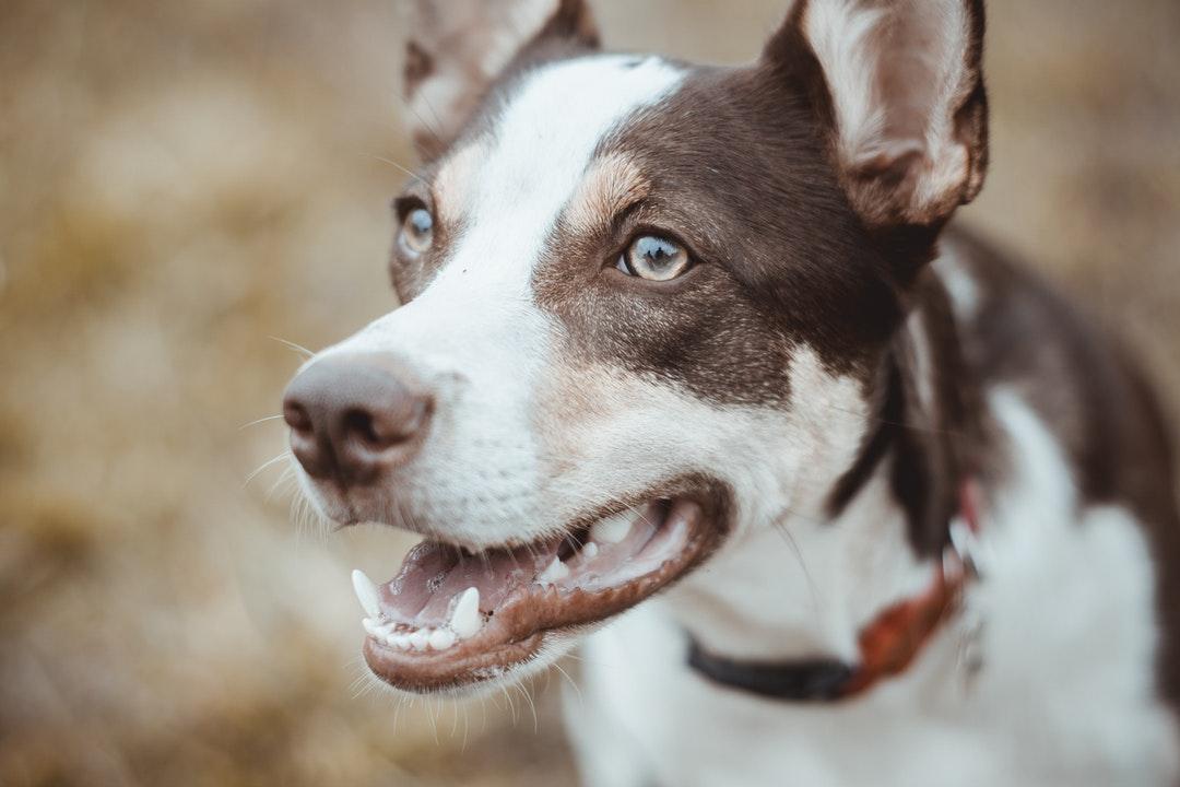 emotional support animal letter in Winder