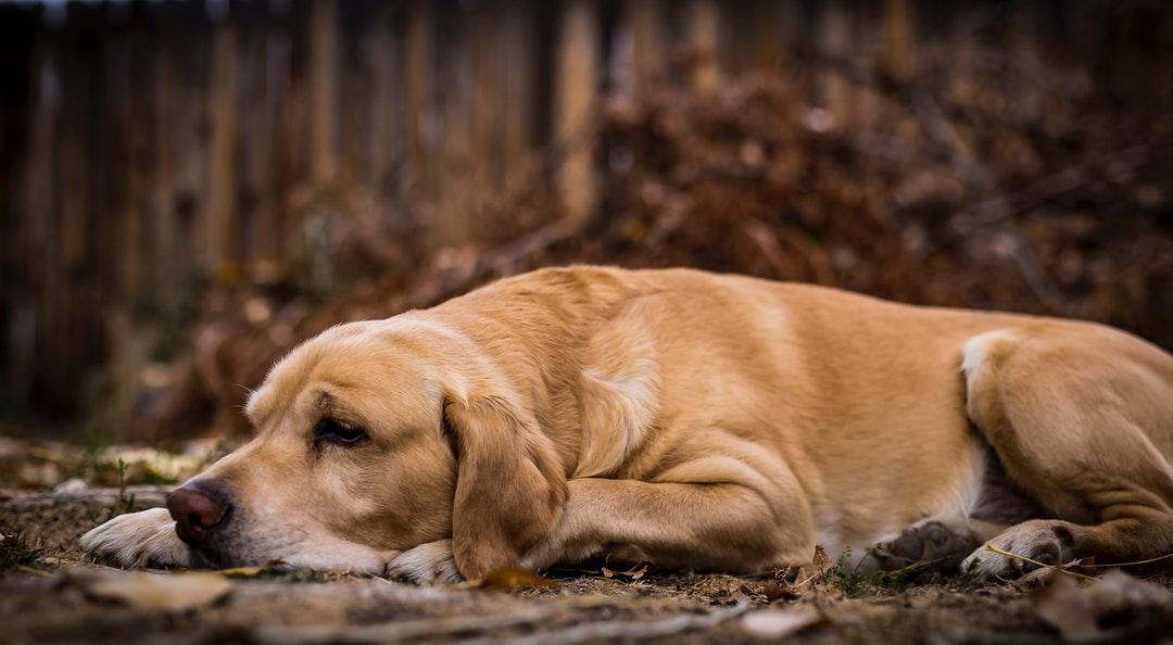 emotional support animal letter in Woodland Park