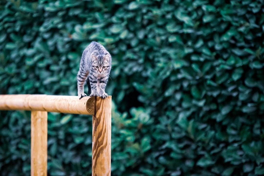 emotional support animal letter in Wyandotte
